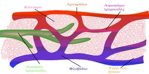 Лимфатические связки